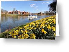 Daffodils Beside The Thames At Hampton Court London Uk Greeting Card