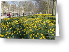 Daffodils In St James Park London Greeting Card
