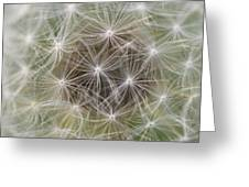 Dandelion Close-up. Greeting Card