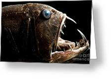Deep Sea Fangtooth Greeting Card