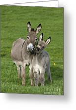 Donkey Mother And Young Greeting Card