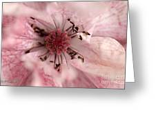 Double Dusty Rose Poppy From The Angel's Choir Mix Greeting Card