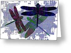 3 Dragonfly Greeting Card