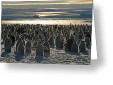 Emperor Penguin Aptenodytes Forsteri Greeting Card by Pete Oxford