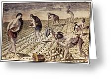 Florida Native Americans, 1591 Greeting Card