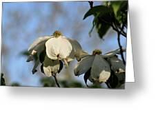 Flowering Dogwood Greeting Card