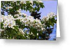 Flowering Pear Branch In The Garden Greeting Card