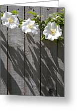3 Flowers On The Fence Greeting Card