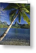 French Polynesia, Moorea Greeting Card