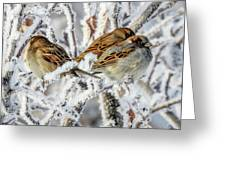 3 Frosty Friends Greeting Card