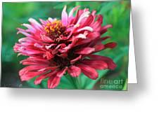 Fuchsia Pink Zinnia From The Whirlygig Mix Greeting Card