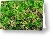 Green Leaves Greeting Card