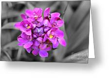 Fuchsia Ground Orchid Greeting Card