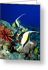 Hawaiian Reef Scene Greeting Card