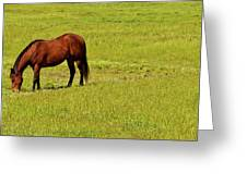 Horse Grazing Greeting Card