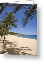 Hulopoe Beach, Palm Tree Greeting Card