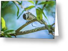 Huthatch Bird  Nut Pecker In The Wild On A Tree Greeting Card