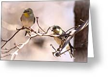 Img_0001 - American Goldfinch Greeting Card