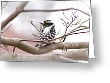 Img_0001 - Downy Woodpecker Greeting Card