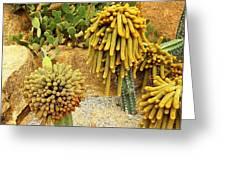 Kaktus Greeting Card