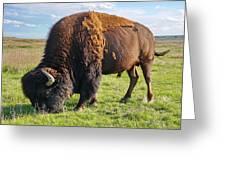 Kansas Buffalo Greeting Card