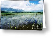 Kauai, Wet Taro Farm Greeting Card