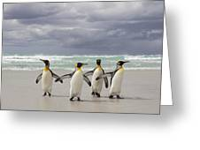 King Penguin Aptenodytes Patagonicus Greeting Card