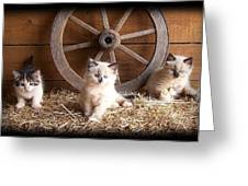 3 Little Kittens With The Wagon Wheel. Greeting Card