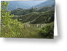 Longsheng Rice Terraces Greeting Card