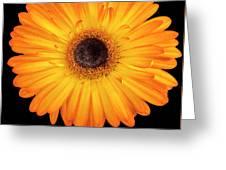 Macro Shot Of Flower Greeting Card