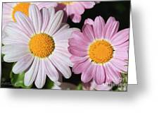 Marguerite Daisy Named Petite Pink Greeting Card