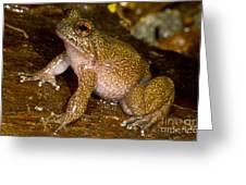 Mehu�n Green Frog Greeting Card