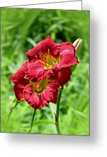 Red Lily Pair Greeting Card