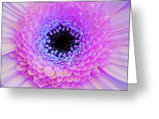 Multicolor Pinks Greeting Card