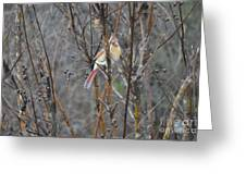 Northern Female Cardinal  Greeting Card