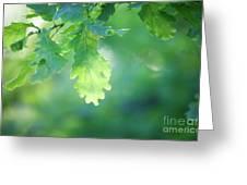 Oak Branch Greeting Card