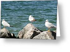 3 Of Them At Sea Greeting Card