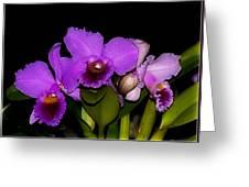 Orquid Greeting Card