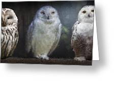 3 Owls On A Branch Greeting Card