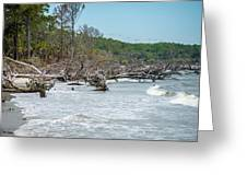 Palmetto Forest On Hunting Island Beach Greeting Card