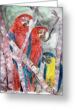 3 Parrots Greeting Card