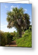 Pelican Island In Florida Greeting Card