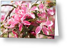 Pink Cherry Tree Greeting Card