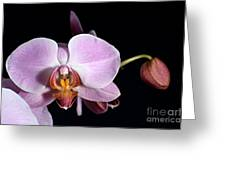 Pink Orchid V Greeting Card