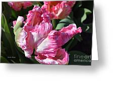 Pink Parrot Tulip Greeting Card