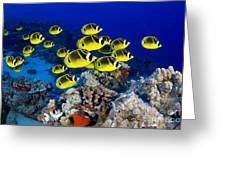 Racoon Butterflyfish Greeting Card