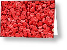 Red Blood Cells, Sem Greeting Card