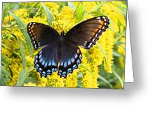 Red-spotted Purple Greeting Card