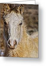 Red Willow Pony Greeting Card