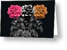 3 Roses Greeting Card